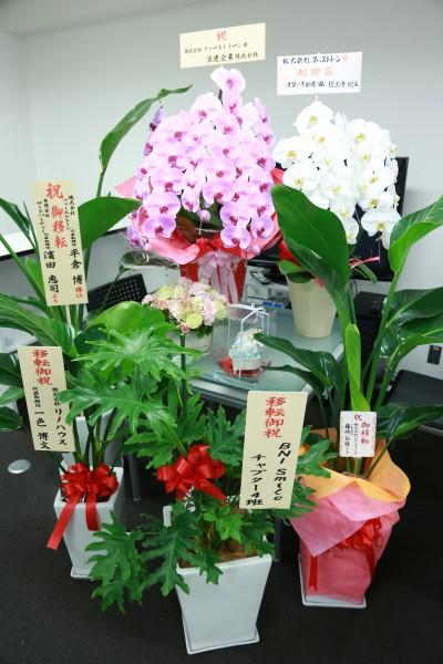 [ブログ用]花
